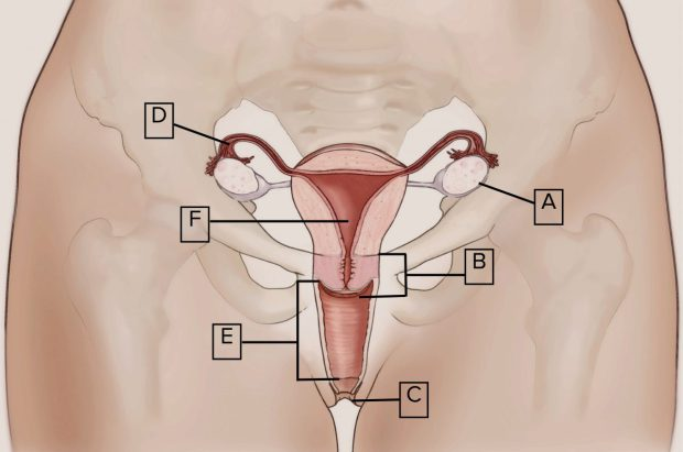 devushku-eksperiment-na-vagina-devushku
