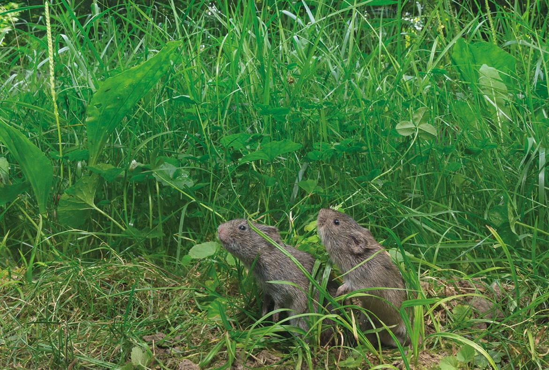 Сушеные мыши от алкоголизма капельница привыводе из запоя