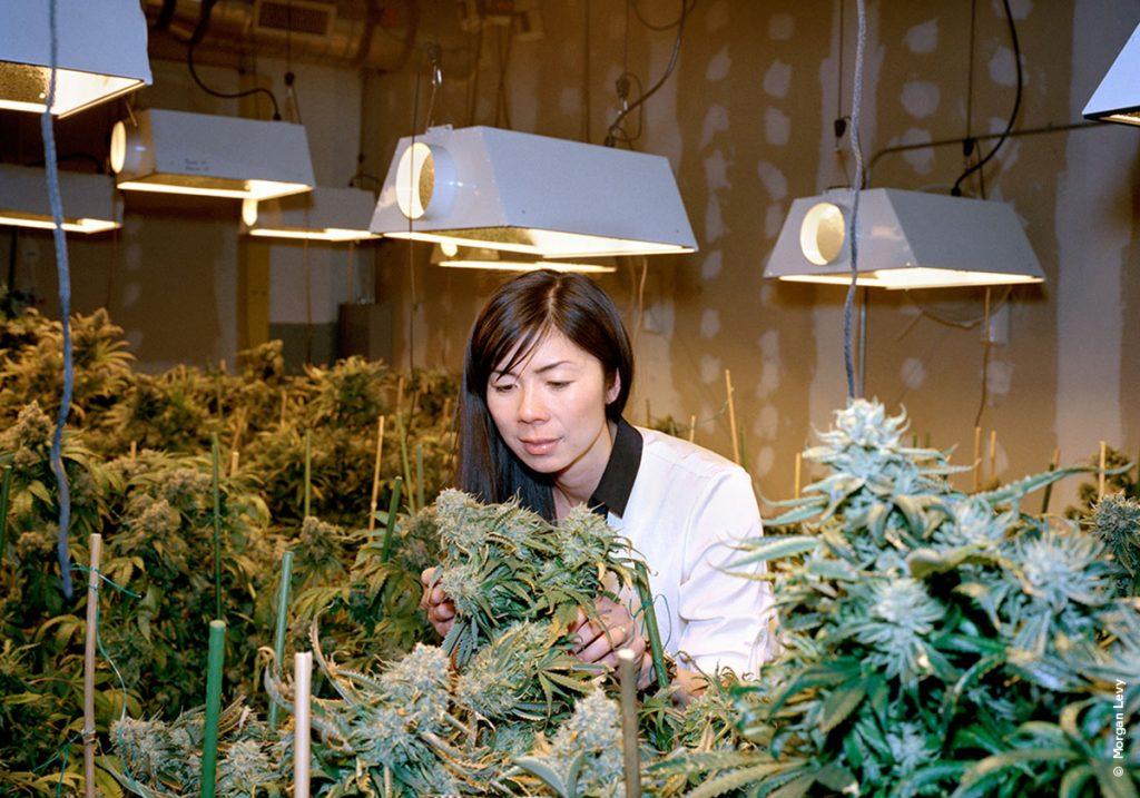 Марихуана и ее воздействие на здоровье разрешенная доза марихуаны