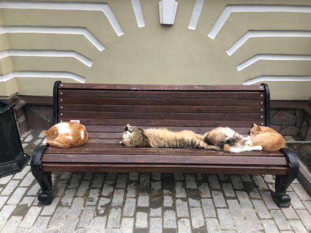 Оттенки доброты: молебен о бездомных животных Cats-640x480