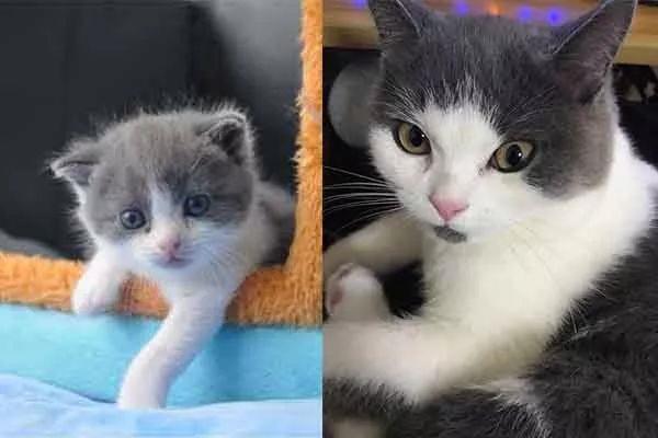 Китайская компания начала клонировать домашних животных