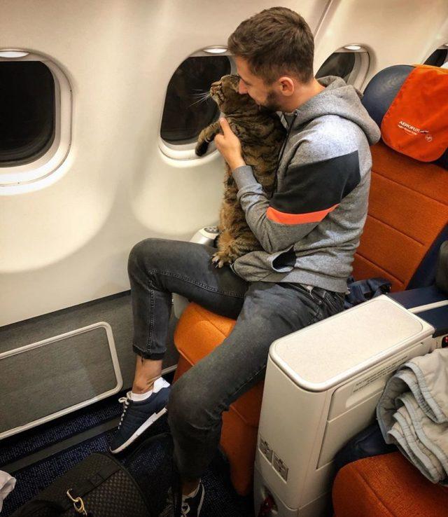 «Аэрофлот» лишил миль пассажира с толстым котом