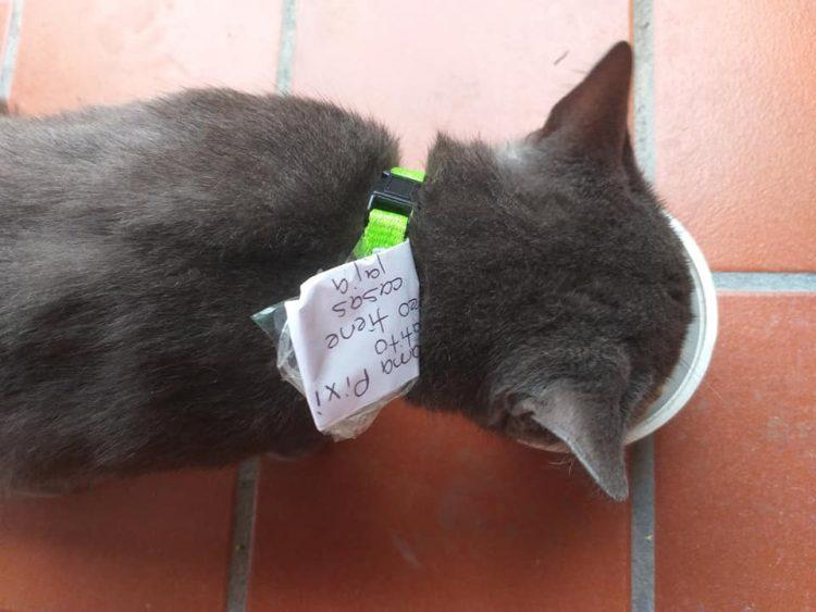 История: в Мексике кот решил жить на два дома — и подружил хозяев между собой