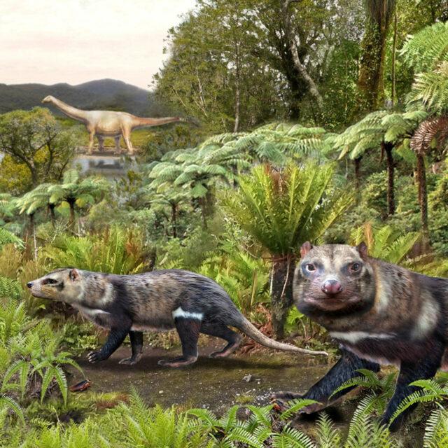 Чилийские ученые обнаружили кости древнего скунса, который жил среди динозавров