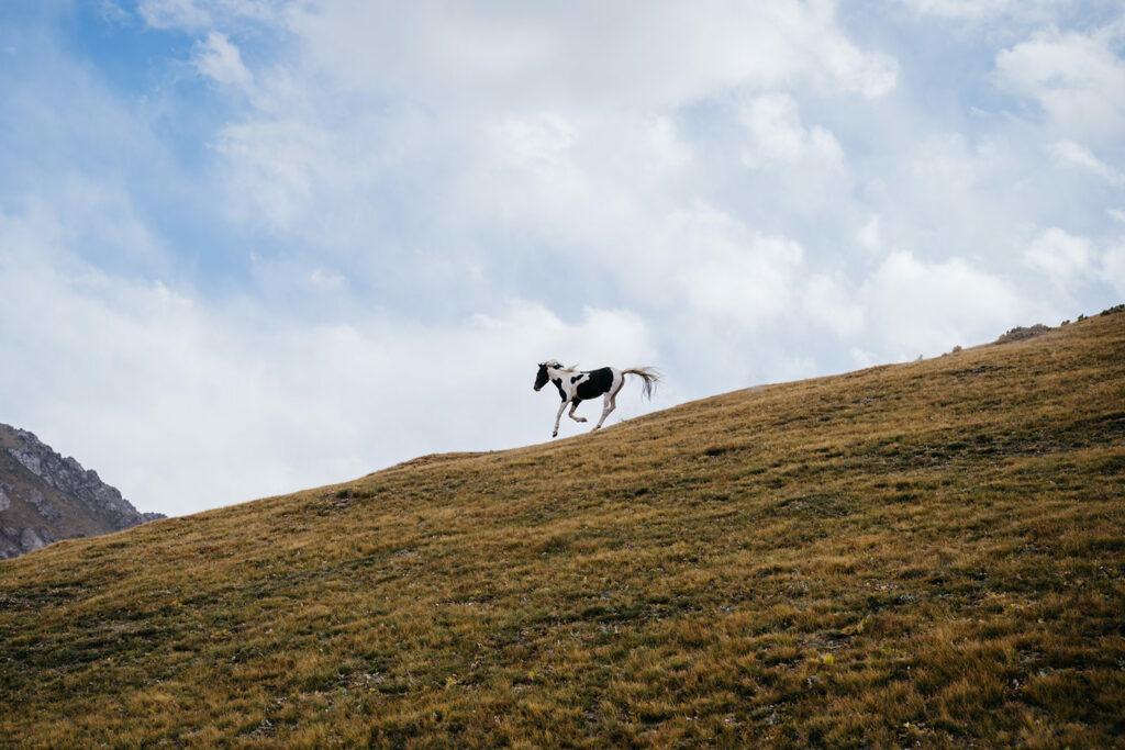 Puteshestviya 11 1024x683 - Караван идет: фотограф изЛондона проехал 40000км иповторил Великий шелковый путь