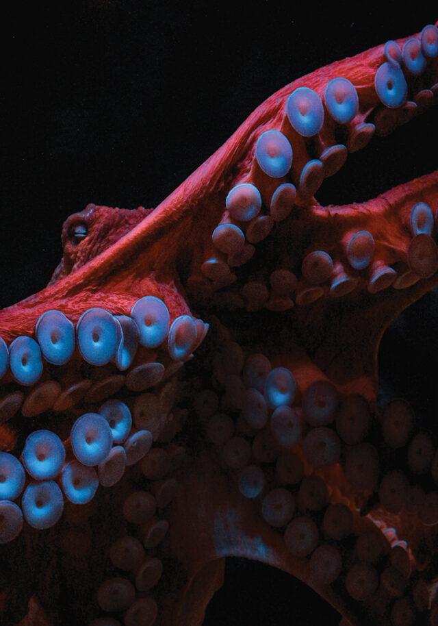 Снитсяли осьминогу жена рыбака? Как исследуют сон головоногих, чтобы понять, зачем спят люди