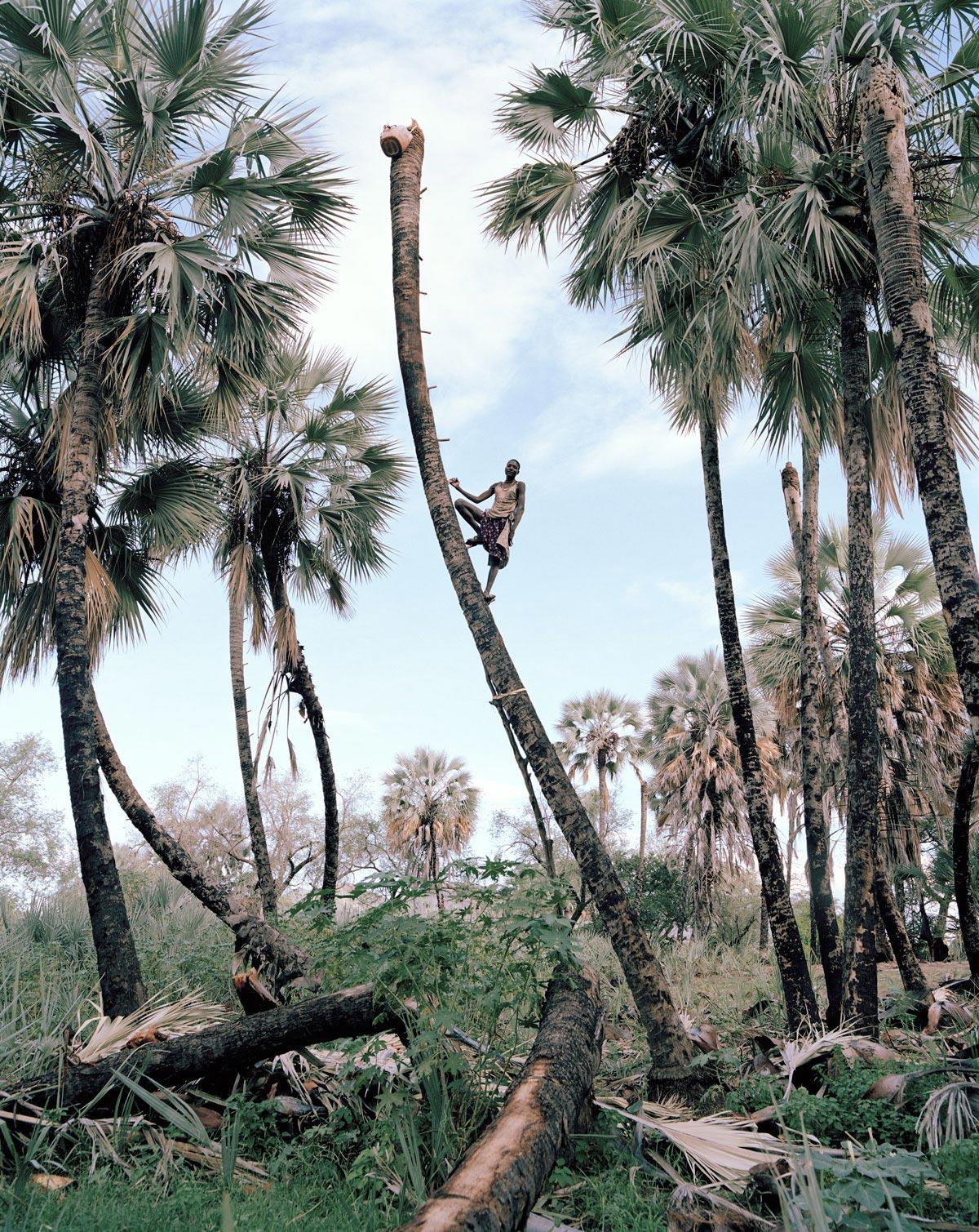 palm-wine-collectors-kyle-weeks-1