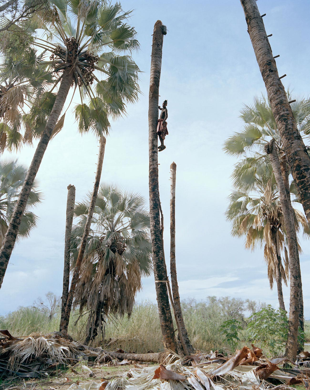 palm-wine-collectors-kyle-weeks-8