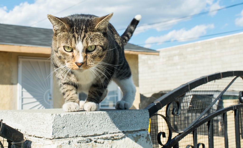 Коты убийцы википедия
